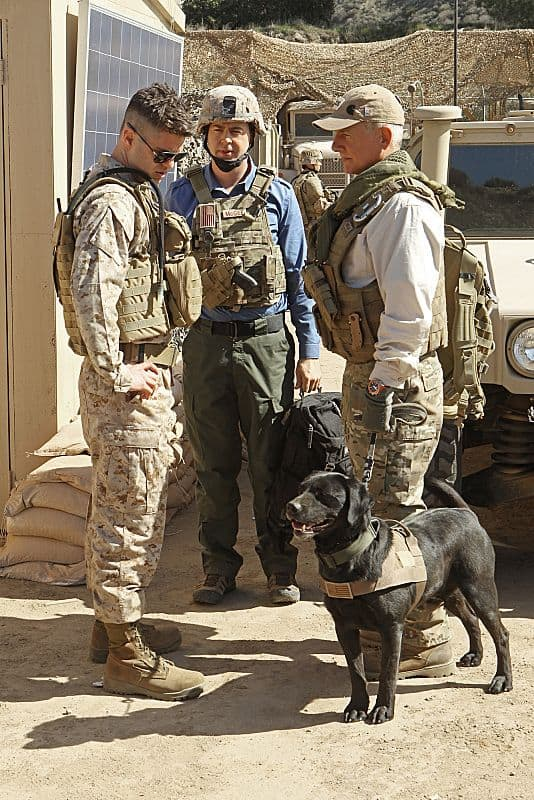 Mark Harmon (right), Sean Murray (center) and Sterling Jones (left)